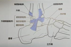 足関節、外側側副靭帯